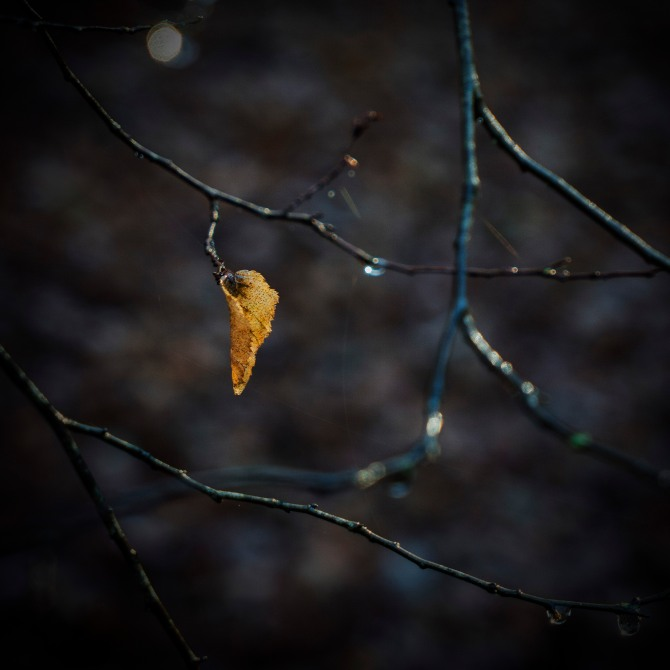 leaf2alt