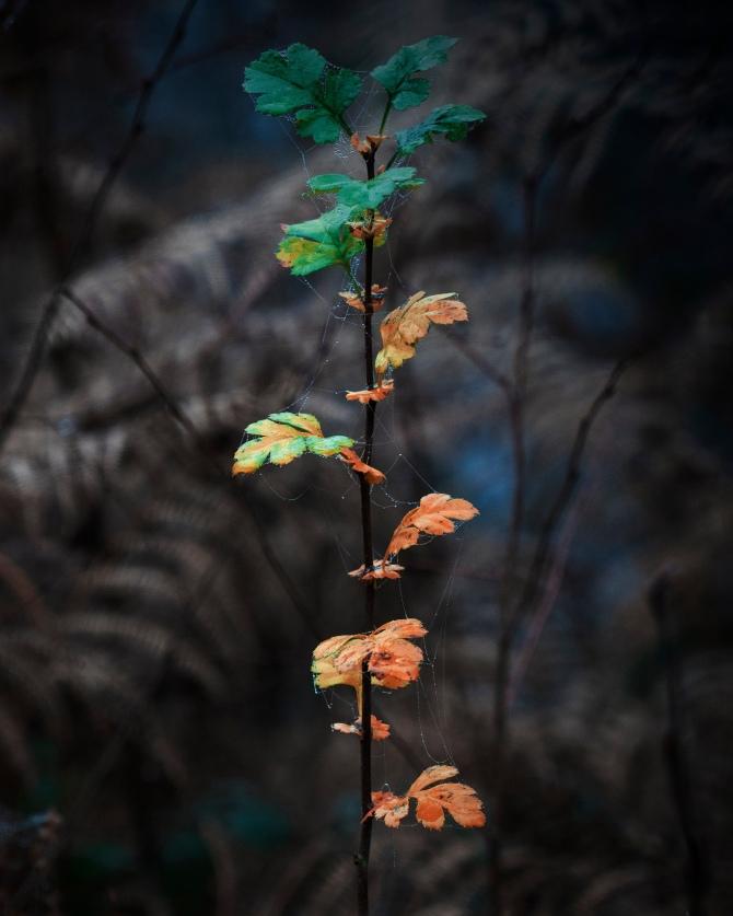 leaves9alt